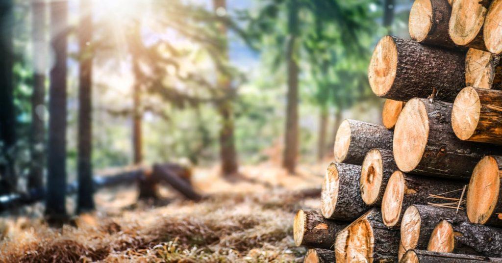 Explication de la récente hausse du prix du bois d'œuvre