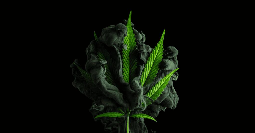 Cannabis : Des opportunités parties en fumée?